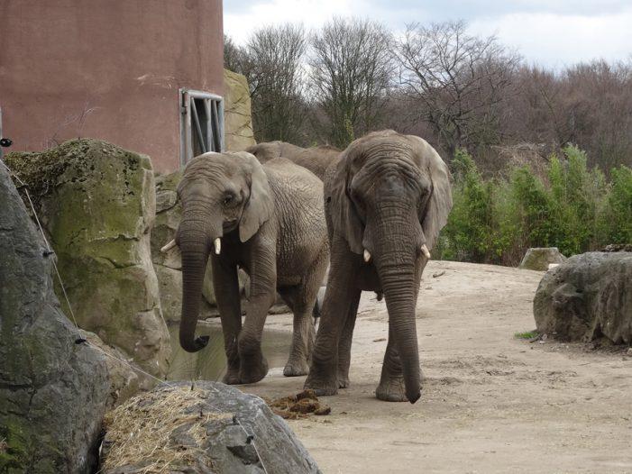 """Zoo Duisburg: Offener Brief an die WAZ zum Artikel """"Artenschutz oder Tierquälerei?"""" vom 13.4.2017"""