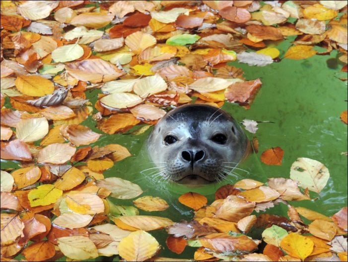 Zoo Duisburg: Herbstferien mit tierischem Programm