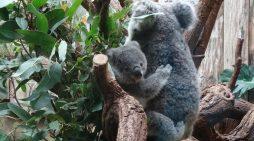 Zoo Duisburg führt Familien- und Feierabendtickets ein