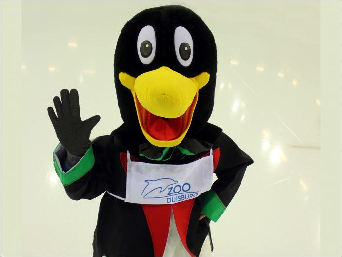 Paul Pinguin aus dem Zoo Duisburg begrüßt die Gäste des Weihnachtsmarktes