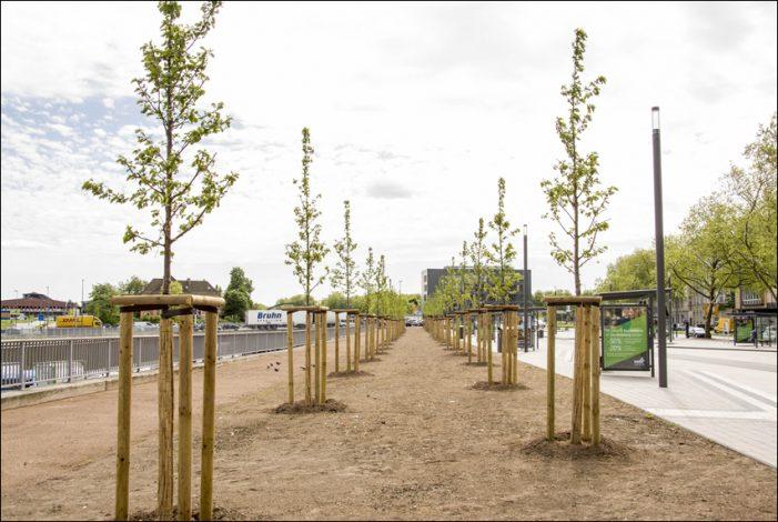 Hauptbahnhof Duisburg: Sören Link und Carsten Tum pflanzen Baum an der Friedrich-Wilhelm-Straße