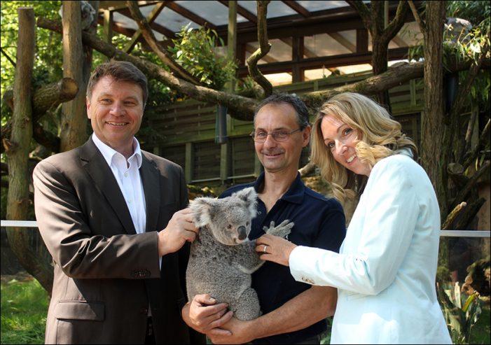 Düsseldorfer Airport unterstützt die Koalas im Duisburger Zoo