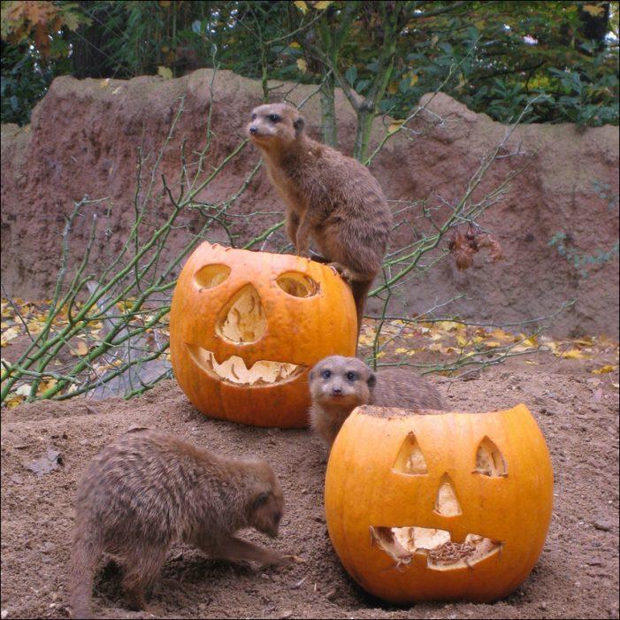 Zoo Duisburg lädt zu Halloween-Wochenende ein: Gruselspaß für die ganze Familie