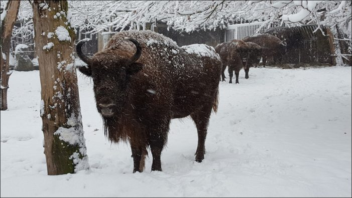 Wie gehen Tiere mit Kälte um? Kindgerechte Themenführung im Zoo Duisburg