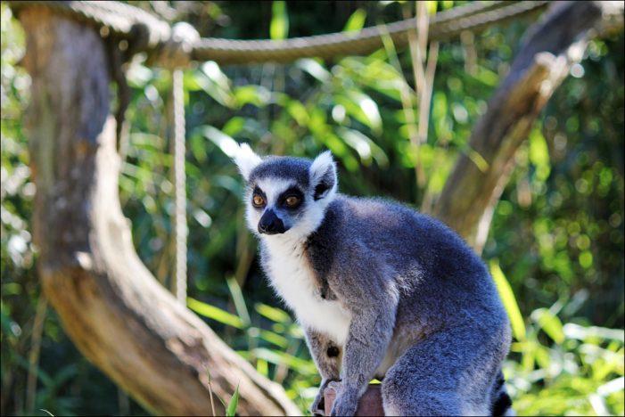 Zoo Duisburg startet in die Sommersaison