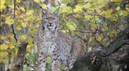 Wie Zootiere im Alter fit bleiben: Themenführung im Zoo Duisburg
