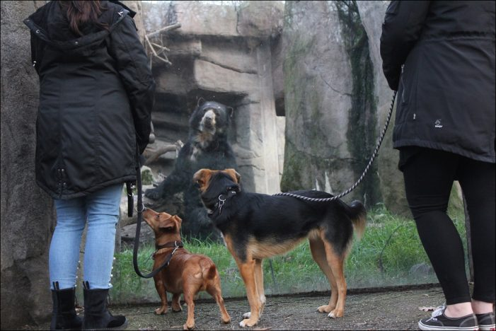 Zoo Duisburg verlängert Testphase Hund und Feierabendticket