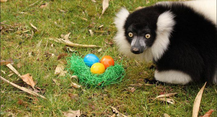 Zoo Duisburg: Tierisch was los in den Osterferien