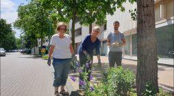 Flower Power in Duisburgs Altstadt: Bürgerschaftliches Engagement ermöglicht Neubepflanzung der Baumscheiben