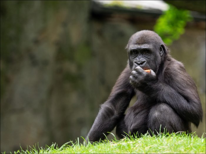 Sommerferienbetreuung im Zoo Duisburg: Es gibt noch einige wenige freie Plätze