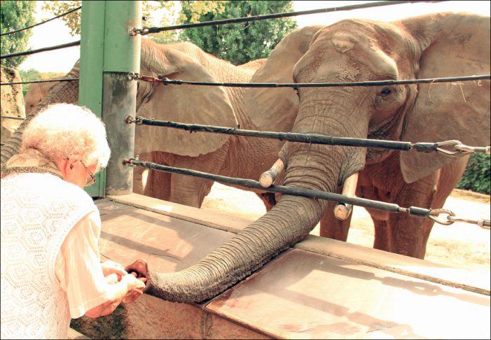 Zoo Duisburg: Auszeichnung als erster demenzfreundlicher Zoo in NRW