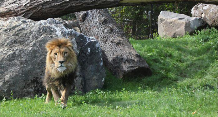 Inventur im Zoo Duisburg: Tierpark am Kaiserberg beherbergt rund 6862 Tiere aus 388 Arten