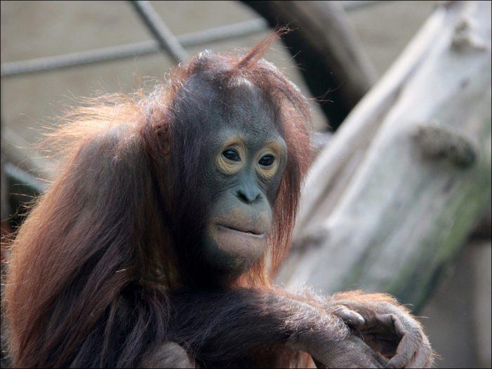 Zoo Duisburg: Aktionstag zum Welt-Affen-Tag