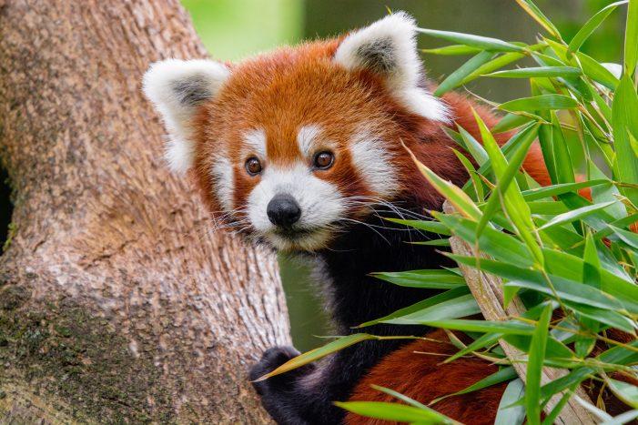 Zoo Duisburg: Besonders Familien nutzen das gute Wetter der vergangenen Tage für einen Besuch