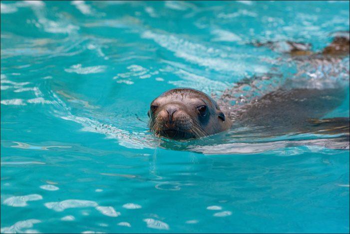 Sommer im Zoo Duisburg: Eisbomben und Co sorgen für Erfrischung