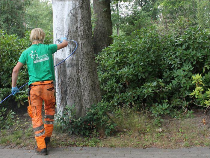 Duisburg: Bäume werden gegen Sonnenbrand geschützt