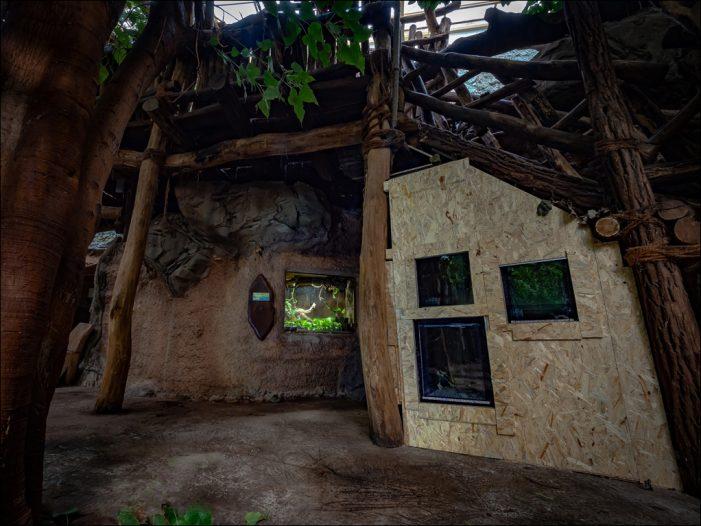 Zoo Duisburg: Neues Ameisen-Quartier nimmt Form an