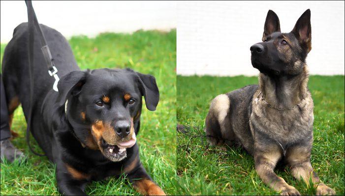 Neue Personenspürhunde für die Polizei Duisburg