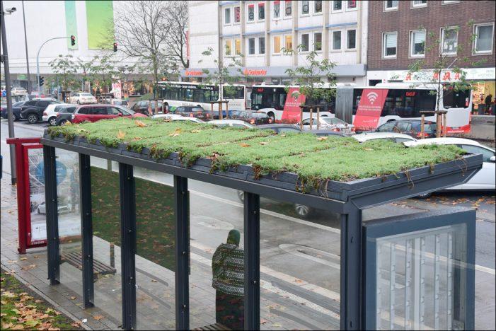 10 Quadratmeter Großstadtdschungel: DVG stellt weitere begrünte Wartehallen in Duisburg auf