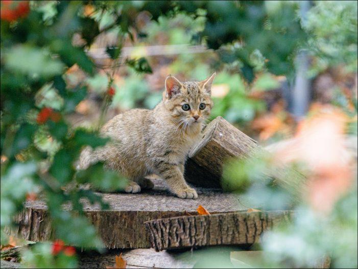 Zoo Duisburg: Tierische Inventur abgeschlossen