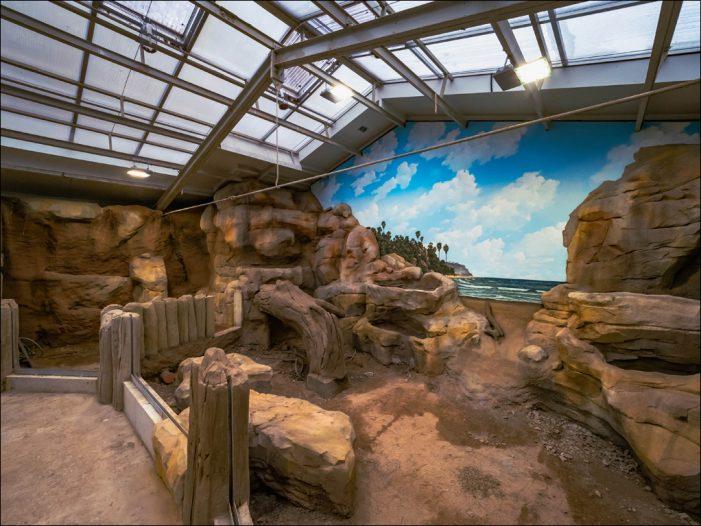 Karibische Insellandschaft: Im Zoo Duisburg entsteht derzeit eine neue Anlage für urtümliche Leguane