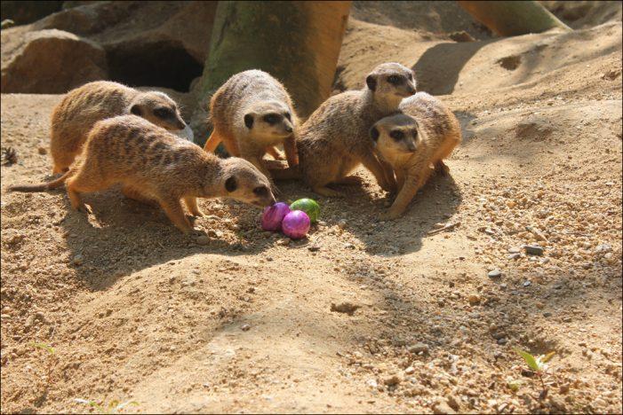 Zoo Duisburg: Digitale Oster-Expedition für Kinder von vier bis acht Jahren