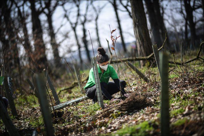 Stadtwerke Duisburg pflanzen 1.250 Bäume für nachhaltigen Klimaschutz in Ehingen