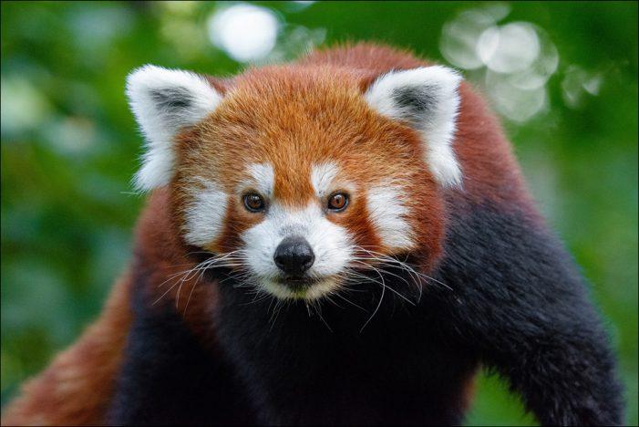 Zoo Duisburg muss ab Montag aufgrund der aktuellen Corona-Lage schließen