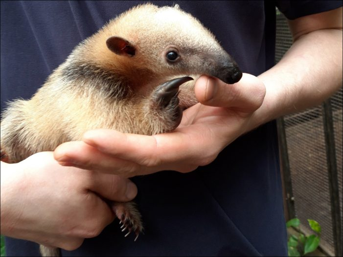 Zoo Duisburg: Nachwuchs mit Seltenheitswert