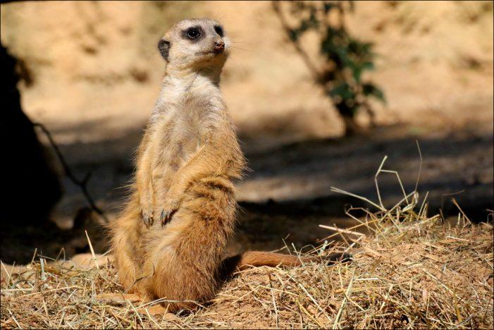 Zoo Duisburg ist ab heute wieder für Besucher geöffnet