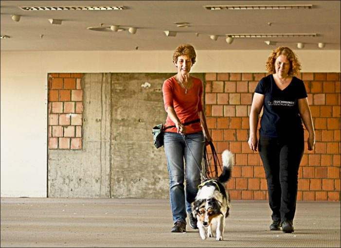 KUBIKK in der Altstadt von Duisburg: Suchhunde trainieren für den Ernstfall